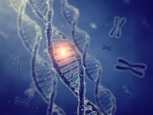 Liposomal p53 gene therapy